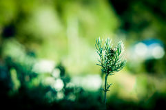 Den gröna växten som växer från, smutsar på jordning Arkivbilder
