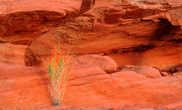 Den gröna växten som växer ut ur det rött, vaggar i dalen av brand arkivbild