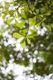 Den gröna våren lämnar bakgrund Arkivbilder