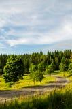 In den grünen Bergen Stockbild