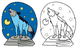 Den gråa vargen som tjuter på månen Royaltyfria Foton