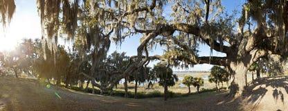 Panoramat av den levande oaken och seglar utmed kusten Arkivbild