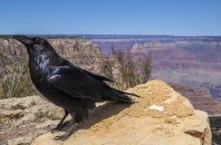 Den Grand Canyon nationalparken #9 royaltyfri fotografi