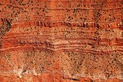 Den Grand Canyon nationalparken, i Arizona, är hem- till mycket av den enorma Grand Canyon, med dess i lager musikband av rött va arkivbild