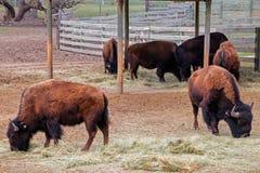 Den Great Plains zoo i Sioux Falls, South Dakota är en familj fr royaltyfria foton