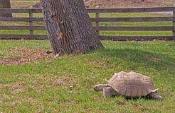 Den Great Plains zoo i Sioux Falls, South Dakota är en familj fr royaltyfri foto