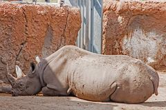 Den Great Plains zoo i Sioux Falls, South Dakota är en familj fr royaltyfri bild