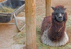 Den Great Plains zoo i Sioux Falls, South Dakota är en familj fr arkivbild