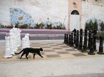 Den grekiska katten har kontrollkompisen Arkivbilder