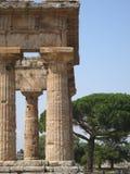 Den grekiska templet på Paestum Italien med bakgrund sörjer Royaltyfri Bild