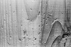 Den grova korniga grå färgen för trä färgar främst den hårda ljusa closeupen Royaltyfri Fotografi