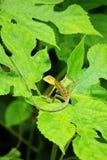 Den gula ödlan på bladet vänder rätt Arkivfoto