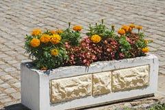 Den gula blomman och annan för fransk ringblomma blommar Royaltyfri Bild