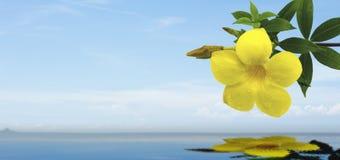 Den gula blomman på havsbakgrunden royaltyfria bilder
