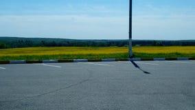 Den gula blomman sätter in Arkivbilder