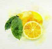 Den gula citronen med gräsplan lämnar vattenfärgmålning Arkivfoton
