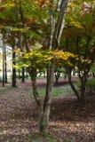 Den gula, gröna och röda hösten färgade sidor i trädet royaltyfria foton