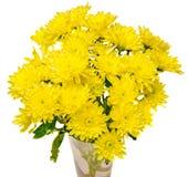 Den gula krysantemumet blommar i en genomskinlig vas, slut upp vit bakgrund Arkivfoton