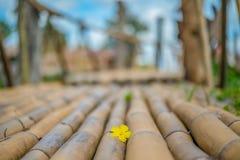 Den gula lilla blomman på bambubron Arkivbild