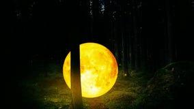 Den gula månen i en skog på natten och eldflugan är det en collage av ett måneskott, en video bakgrund för bästa ögla för att kop stock video