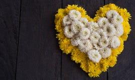 Den gula och vita krysantemumblomman formade som en hjärta Royaltyfria Bilder