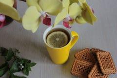 Den gula orkidén, rånar av te och kakor på en träbakgrund royaltyfri bild