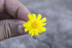 Den gula tusenskönan blommar, trottoarer, dekorativa blommor, naturliga kulöra blommor, dekorativa blommor för staden, blommor me Royaltyfria Bilder