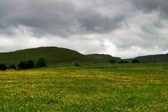 Den gula våren blommar under en molnig himmel i de Yorkshire dalarna Royaltyfria Bilder