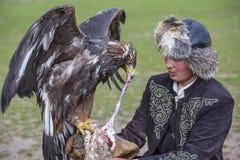 Den guld- örnen får matad av hans instruktör Royaltyfri Fotografi