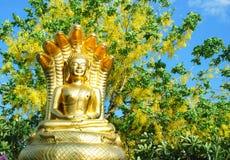 Den guld- Buddhastatyn med Cassia Fistula blommar trädet Royaltyfri Foto