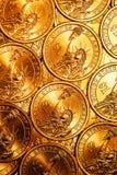Den guld- dollaren myntar bakgrund Fotografering för Bildbyråer