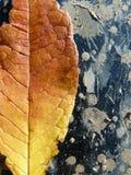 Den guld- extrakten av hösten arkivfoton