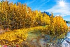 Den guld- hösten av Rocky Mountains Royaltyfri Fotografi