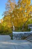 Den guld- hösten i staden parkerar Royaltyfri Bild