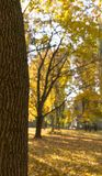 Den guld- höstplatsen i parkerar, med sidor, solen som skiner till och med träden, och blå himmel hösten räknade fallna skogjordn fotografering för bildbyråer