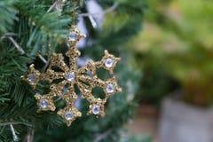 den guld- skinande julprydnaden som hänger från ett grönt, sörjer trädet Royaltyfria Foton