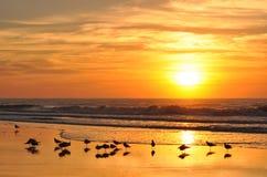 Den guld- soluppgången över stranden och att krascha vågr Arkivbild