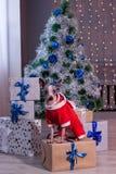 Den gulliga amerikanska hårlösa terriern sitter i en klänning för helgdagsafton för ` s för nytt år nära julträdet Älsklings- dju Fotografering för Bildbyråer