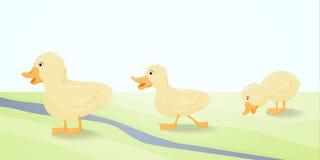 Den gulliga ankungen för illustration tre. Arkivbild
