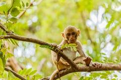 den gulliga apan bor i en naturlig skog Royaltyfria Foton