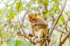 den gulliga apan bor i en naturlig skog Arkivfoto