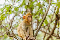 den gulliga apan bor i en naturlig skog Royaltyfri Fotografi