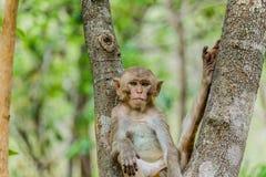den gulliga apan bor i en naturlig skog Arkivbilder