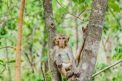 den gulliga apan bor i en naturlig skog Fotografering för Bildbyråer