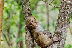 den gulliga apan bor i en naturlig skog Royaltyfria Bilder