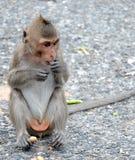 Den gulliga apan bor i en naturlig skog av Thailand fotografering för bildbyråer