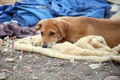 Den gulliga bruna hunden väntar utanför Arkivfoton