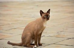 Den gulliga bruna katten sitter på golvbakgrunden Arkivfoton
