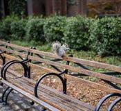 Den gulliga ekorren i mitt parkerar zoo Arkivfoto