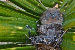 Den gulliga fågeln bygga bo in på treen Arkivbild